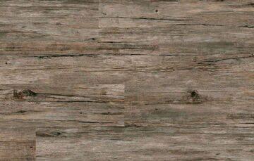 Birch Old-10(2)